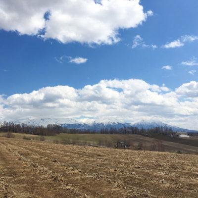 アスパラガス 畑の様子