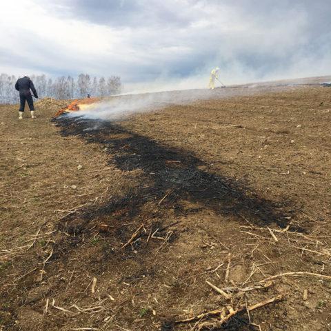 アスパラガス 焼畑